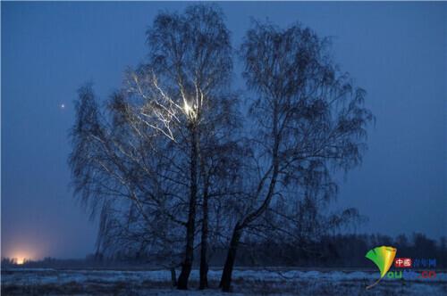 俄罗斯大学生穿越西伯利亚森林爬8米高树上网课