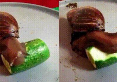 蜗牛吃黄瓜