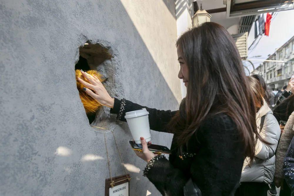 """上海网红咖啡店熊爪咖啡  人们等待一只""""熊爪""""出现…"""