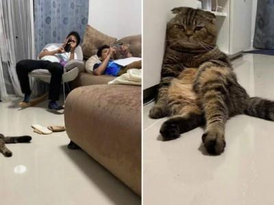 一家人和猫咪北京瘫  这气质一看就是一家人