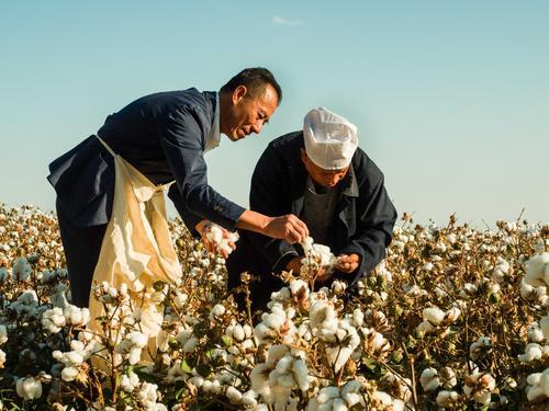 HM耐克阿迪等国外品牌为什么抵制新疆棉花 答案在背后的这个西方组织