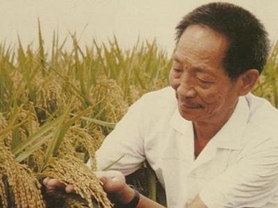 """""""杂交水稻之父""""袁隆平逝世  老人为什么摔了一次后 很快就过世了?"""