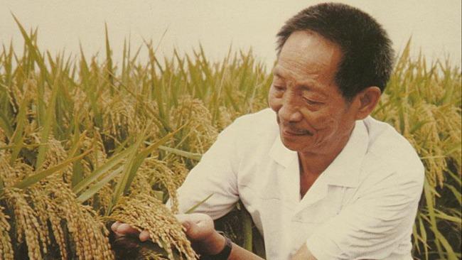 """""""杂交水稻之父""""袁隆平逝世  老人为什么摔倒之后 很快就过世了?"""